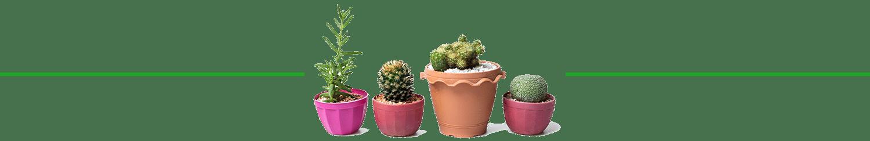 planty-divider